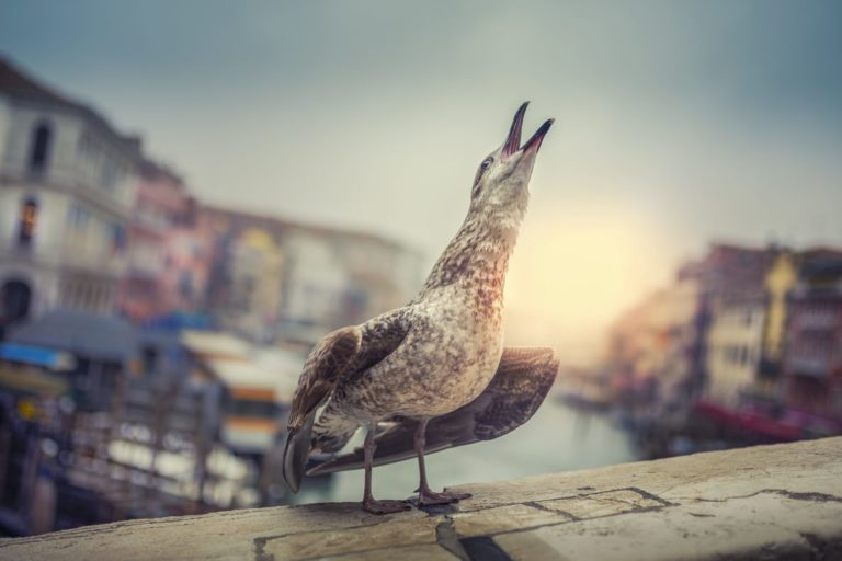 Venice protector